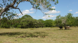 826 Acre BMS Ranch – Gonzales County