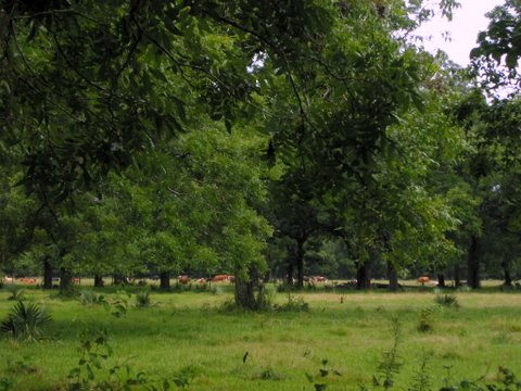 194 Acres of Wooded & Pasture