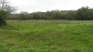 194 Acres – Matagorda County