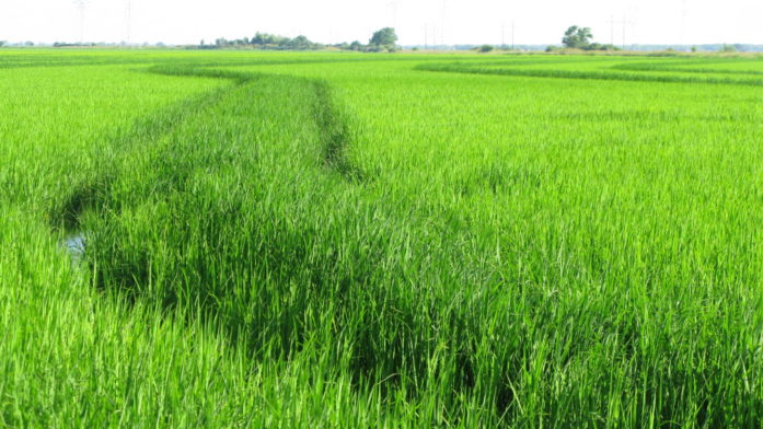 4000 Acre Row Crop/Rice Farm