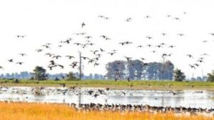 375 Acres of Prime Duck Hunting with Timber & Rice