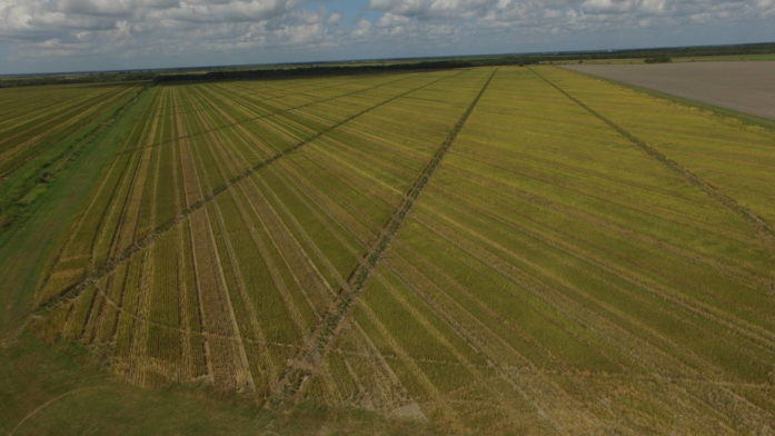 1,500 Acre Irrigated Rice/Row Crop Farm – Danbury, Texas